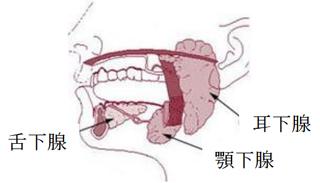舌 下 腺腫 れ